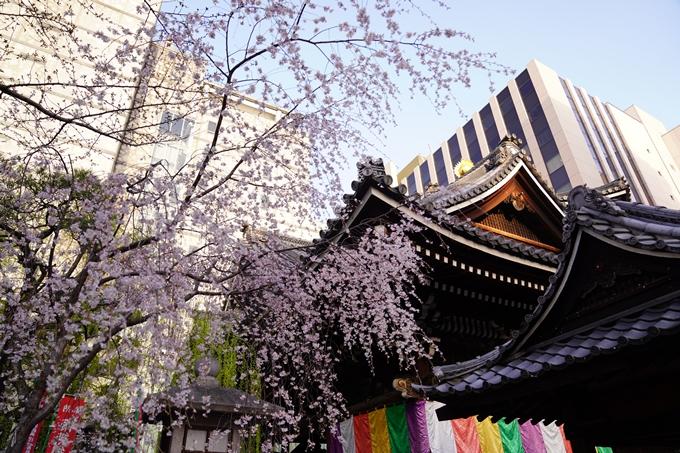 桜_2021_08 六角堂 No20