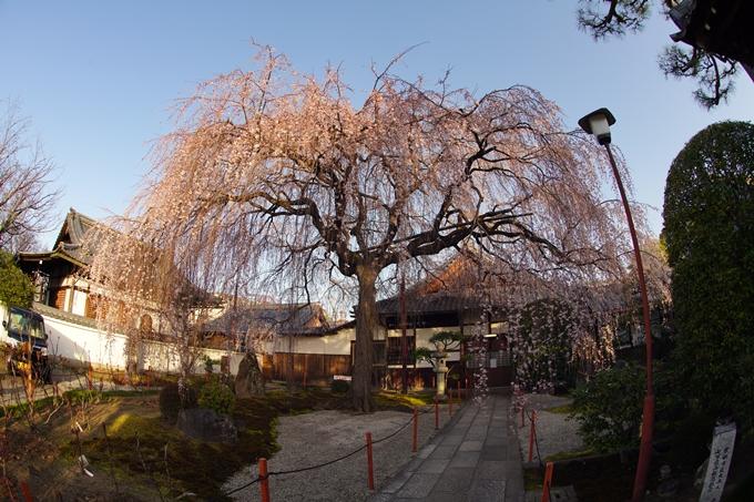 桜_2021_09 本満寺 No15