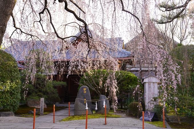 桜_2021_09 本満寺 No6