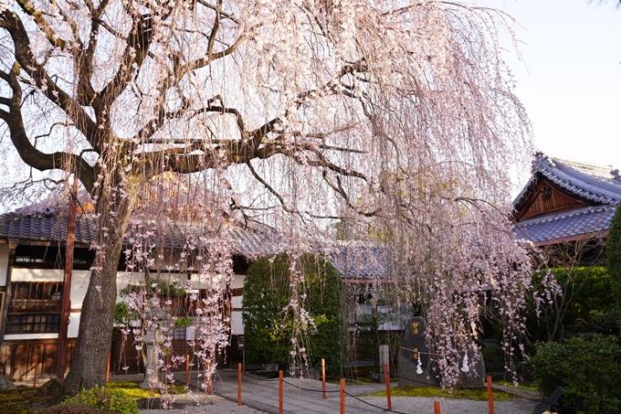 桜_2021_09 本満寺 No10