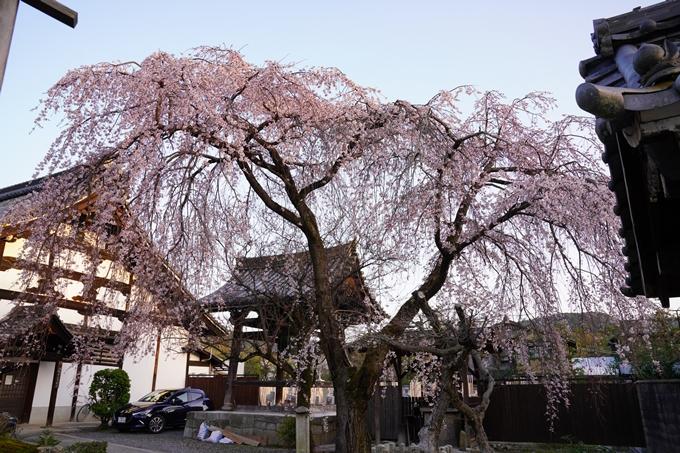 桜_2021_11 満願寺 No2