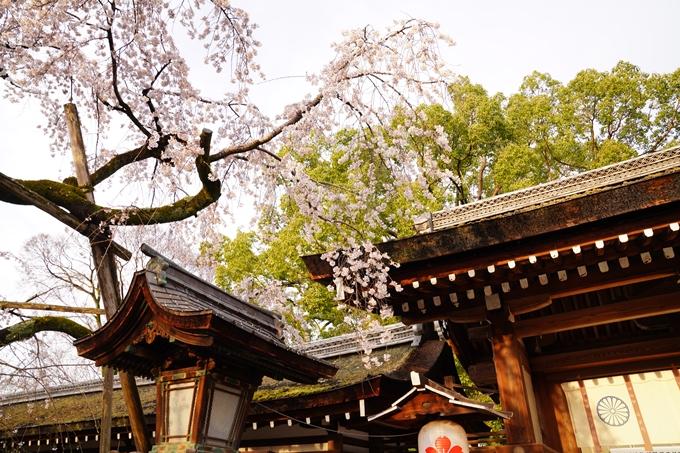 桜_2021_12 平野神社 No10