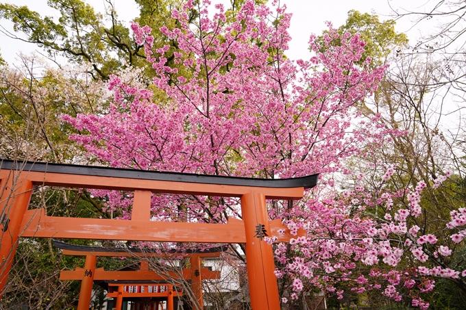 桜_2021_12 平野神社 No11