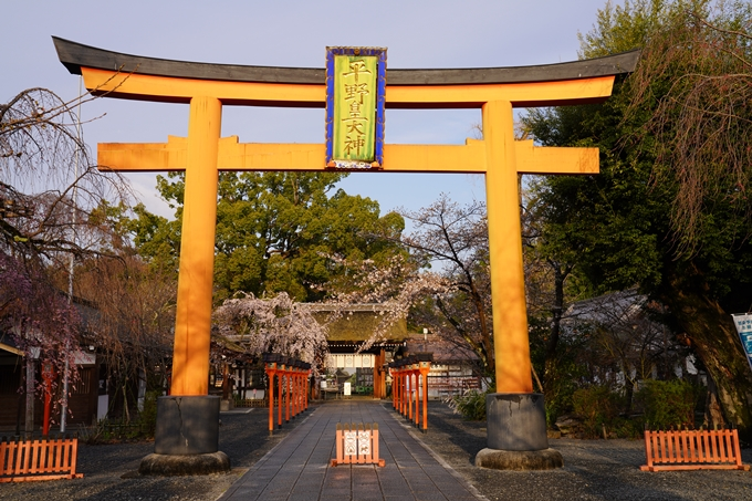 桜_2021_12 平野神社 No13