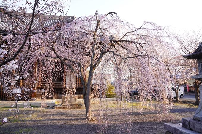 桜_2021_16 立本寺 No3