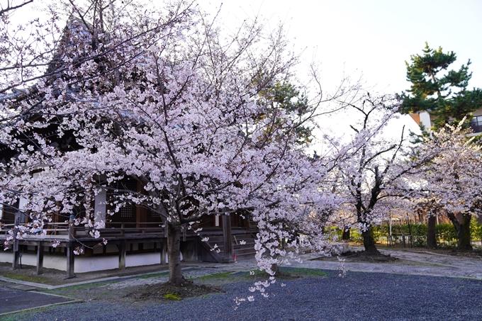 桜_2021_16 立本寺 No10