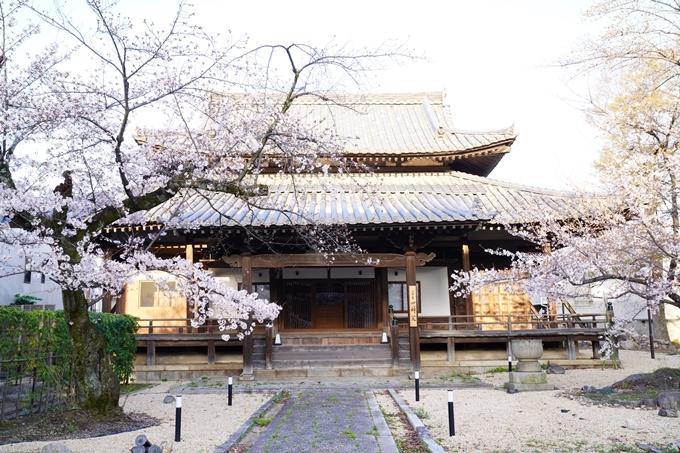 桜_2021_16 立本寺 No12