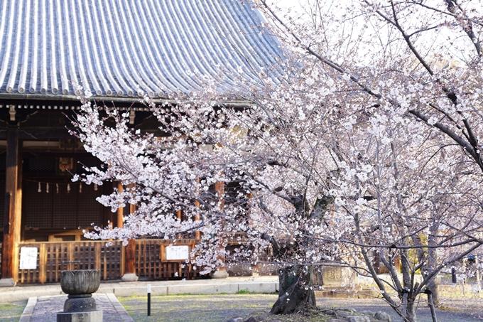桜_2021_16 立本寺 No15