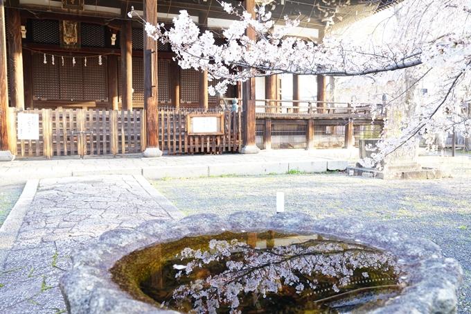 桜_2021_16 立本寺 No17