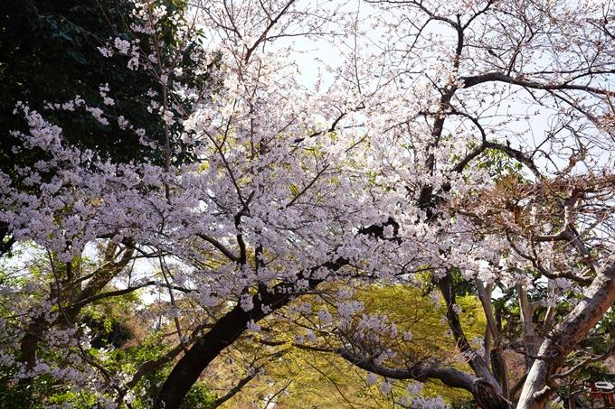 桜_2021_17 建勲神社 No10