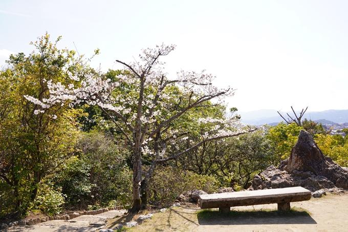 桜_2021_17 建勲神社 No13