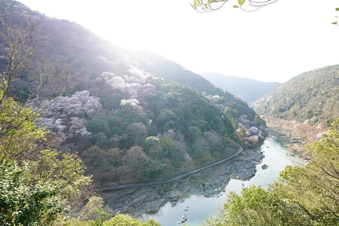 桜_2021_20嵐山公園 No2