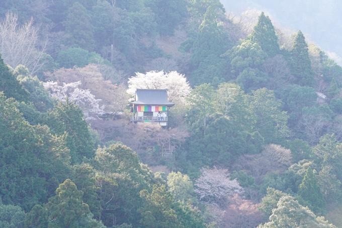 桜_2021_20嵐山公園 No3
