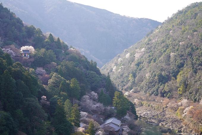 桜_2021_20嵐山公園 No5