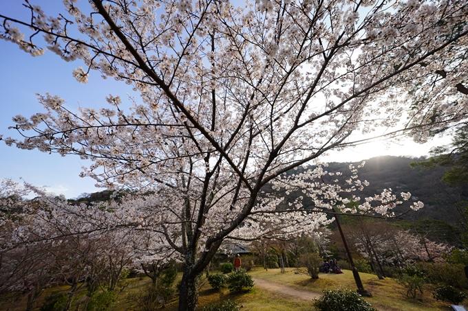 桜_2021_20嵐山公園 No13
