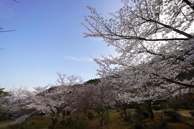 桜_2021_20嵐山公園 No14