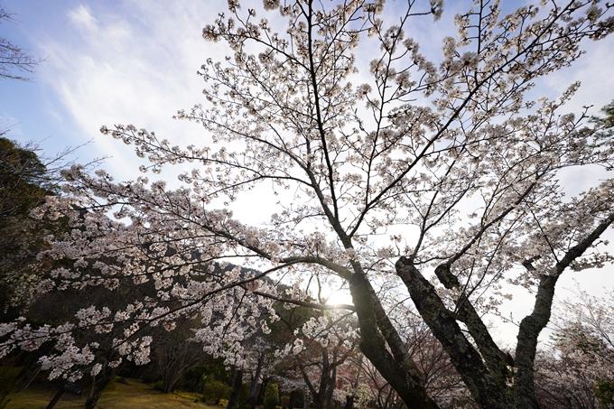 桜_2021_20嵐山公園 No16