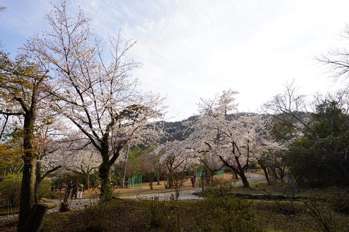 桜_2021_20嵐山公園 No18
