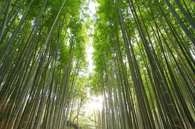 桜_2021_20嵐山公園 No19