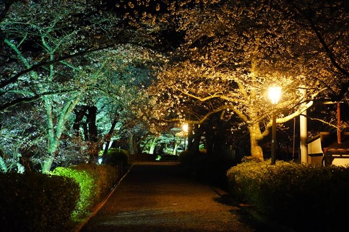 桜_2021_23 七谷川_ライトアップ No2