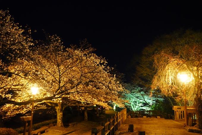 桜_2021_23 七谷川_ライトアップ No5