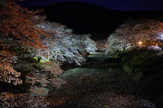 桜_2021_23 七谷川_ライトアップ No7