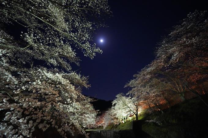 桜_2021_23 七谷川_ライトアップ No11
