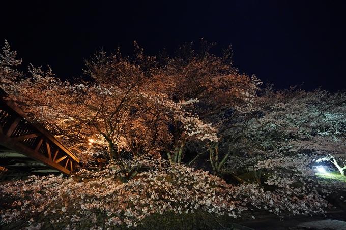 桜_2021_23 七谷川_ライトアップ No15