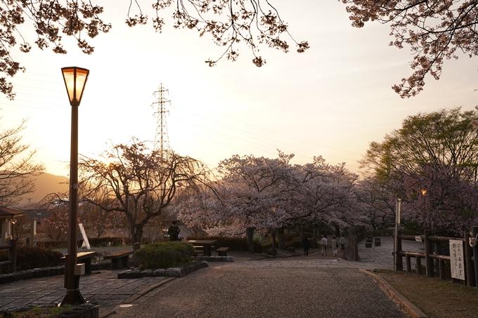桜_2021_49 七谷川_02 No21