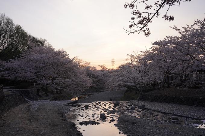 桜_2021_49 七谷川_02 No22