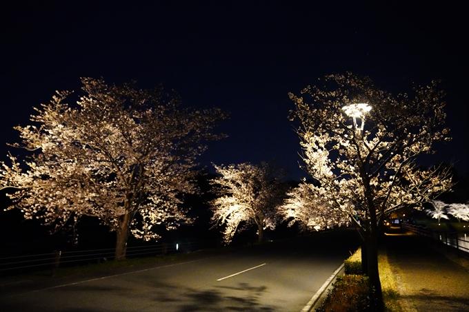 桜_2021_24 水鳥のみち_ライトアップ No2