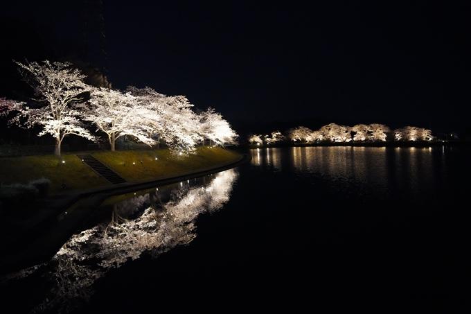 桜_2021_24 水鳥のみち_ライトアップ No7