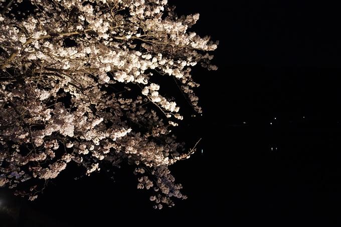 桜_2021_24 水鳥のみち_ライトアップ No9