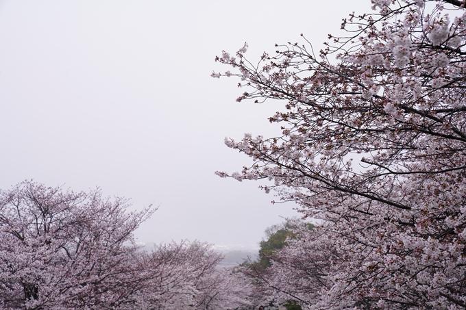 桜_2021_25 インクライン_南禅寺_哲学の道 No2