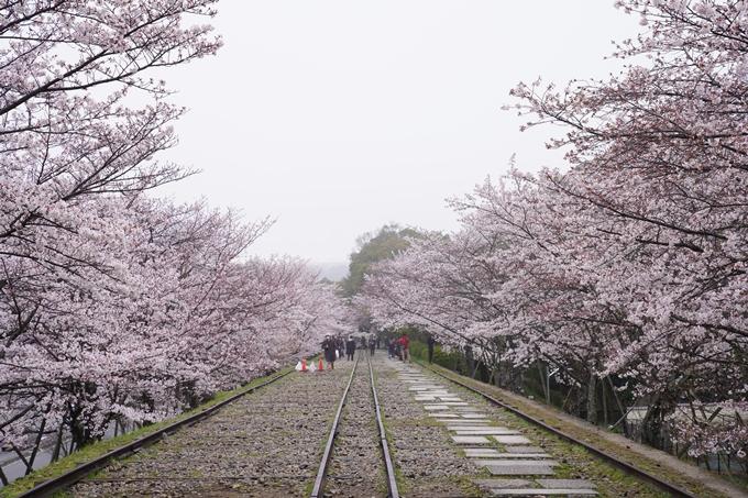桜_2021_25 インクライン_南禅寺_哲学の道 No4