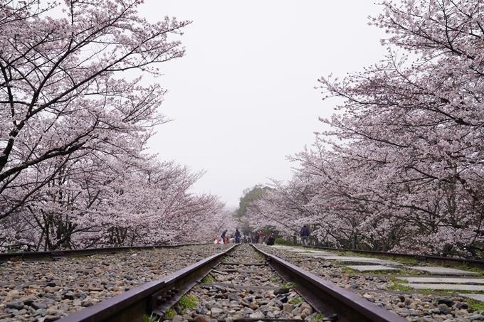 桜_2021_25 インクライン_南禅寺_哲学の道 No5