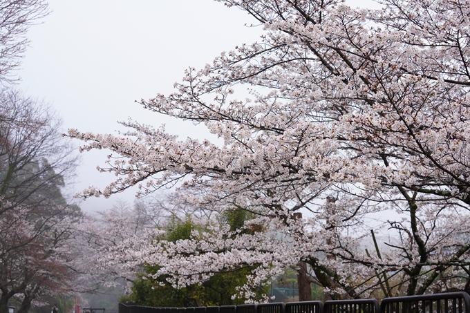 桜_2021_25 インクライン_南禅寺_哲学の道 No6