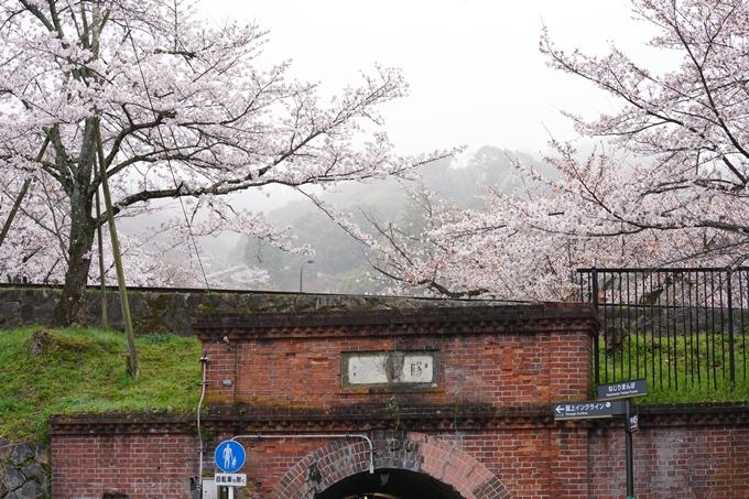 桜_2021_25 インクライン_南禅寺_哲学の道 No8