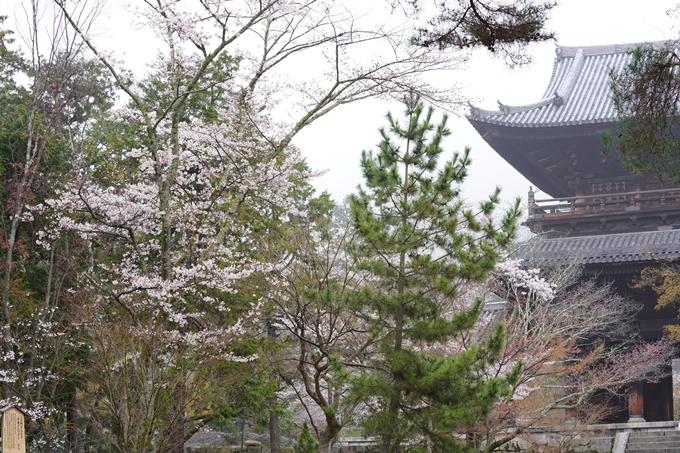 桜_2021_25 インクライン_南禅寺_哲学の道 No9