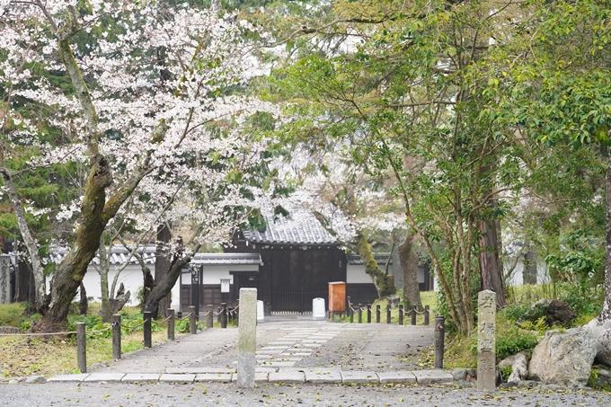 桜_2021_25 インクライン_南禅寺_哲学の道 No11