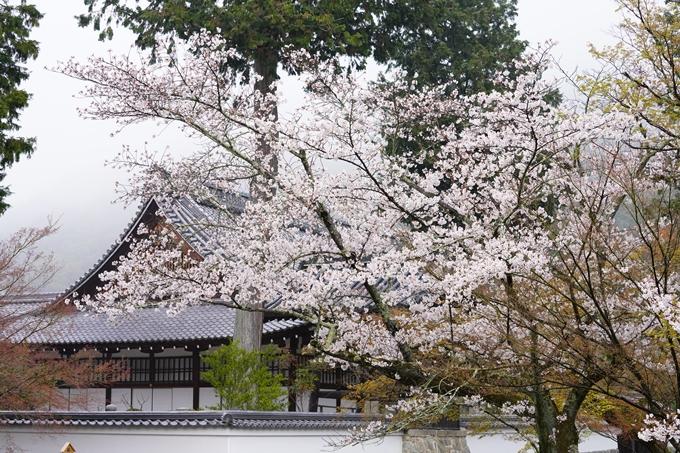 桜_2021_25 インクライン_南禅寺_哲学の道 No12