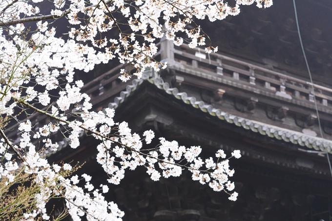 桜_2021_25 インクライン_南禅寺_哲学の道 No14