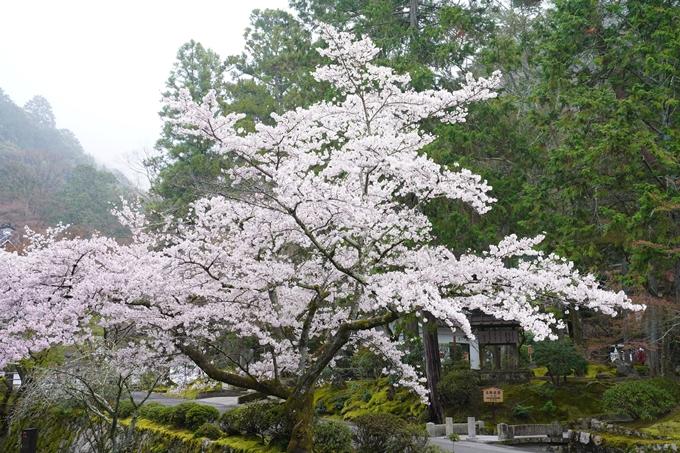 桜_2021_25 インクライン_南禅寺_哲学の道 No18