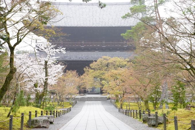 桜_2021_25 インクライン_南禅寺_哲学の道 No19