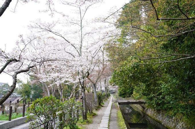 桜_2021_25 インクライン_南禅寺_哲学の道 No21