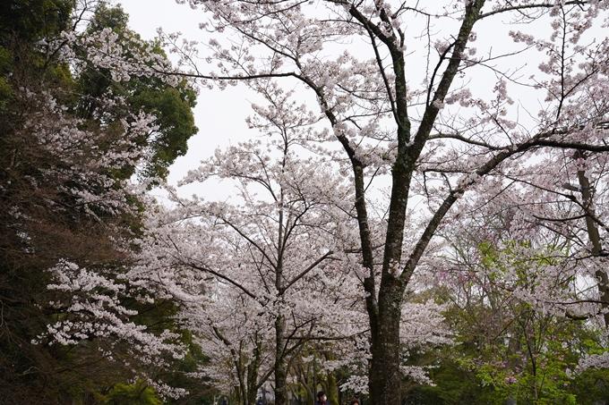 桜_2021_25 インクライン_南禅寺_哲学の道 No22