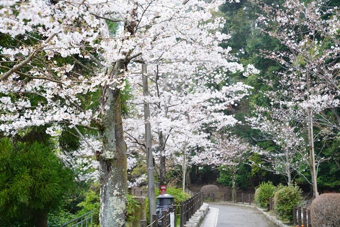桜_2021_25 インクライン_南禅寺_哲学の道 No24