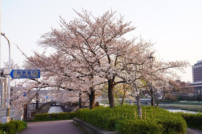 桜_2021_26 岡崎疎水 No3