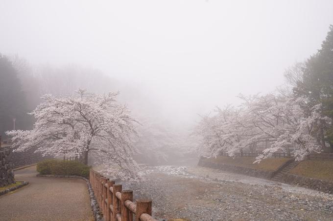 桜_2021_27 七谷川 No3