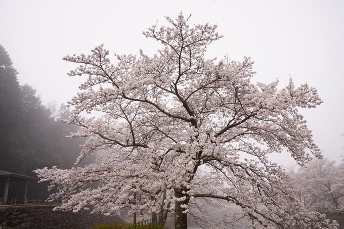桜_2021_27 七谷川 No4